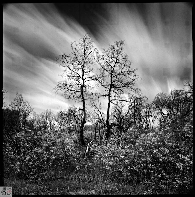 Bugac Erdő két fa
