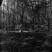 Mátra Ősz 02 erdőben