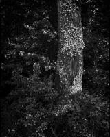 Tree Disease - Fa betegség