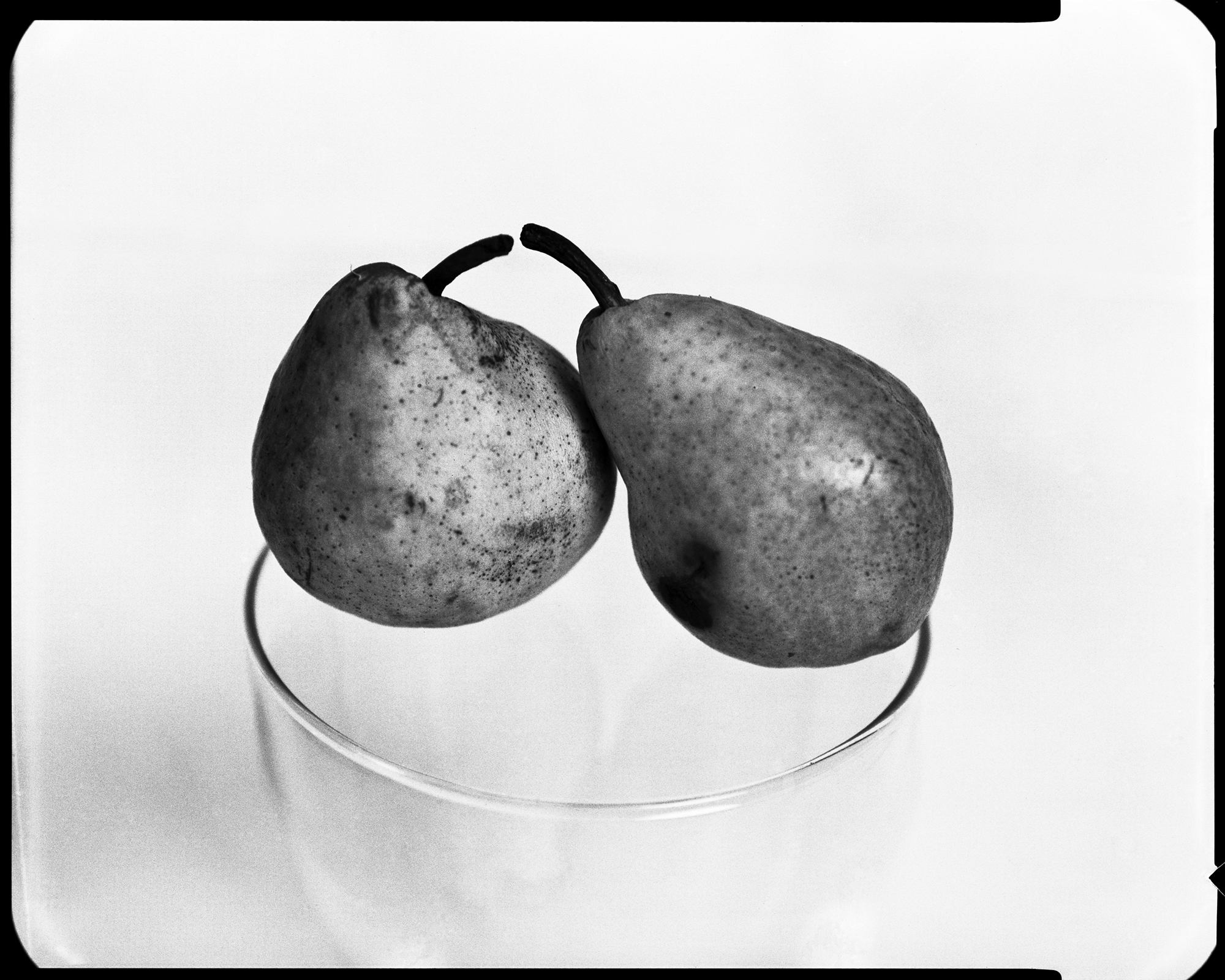Pair of pears / Körte pár