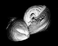 Study-cabbage :: Káposztanulmány